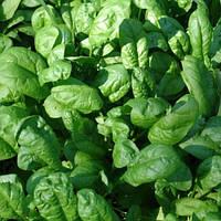 Семена шпината Лагос F1 (Lagos F1) 250 гр.