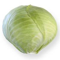 Семена капусты Анкома F1 (Ancoma F1), 1000 сем. (калибр.), белокочанной поздней