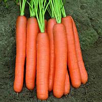Семена моркови Монанта (Monanta) 1 кг.