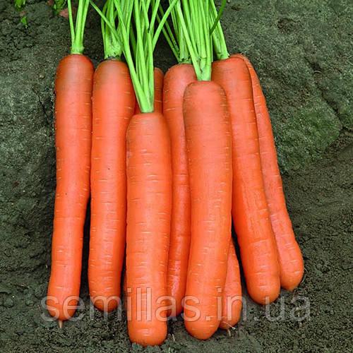 Семена моркови Монанта (Monanta), 50 гр.