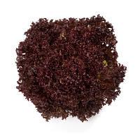Семена салата Кармези (Carmesi), 5000 сем. (драж.), листового