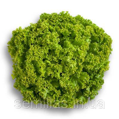 Семена салата Локарно (Locarno), 1000 сем., листового