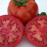 Семена томата детерминантного (кустового) Мейс F1 (Meys F1) 1 000 сем.