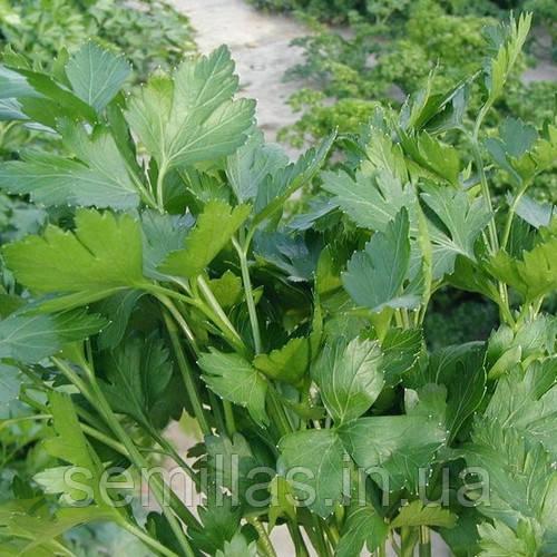 Семена петрушки Новас (Novas), 250 гр., листовой