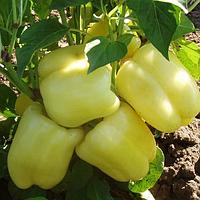 Семена перца Никита F1 (Nikita F1), 5 гр., сладкого