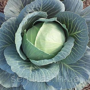 Семена капусты белокочанной средней Грин Бой F1 (Green Boy F1) 1 000 сем.
