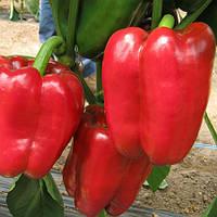 Семена перца сладкого Даймос F1 (Daymos F1) 1 000 сем.