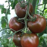 Семена томата черного индетерминантного (высокорослого) Биг Сашер F1 (Big Sacher F1) 500 сем.