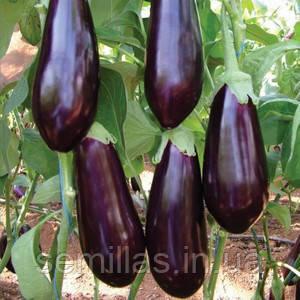Семена баклажана Визир F1 (Vizir F1) 500 сем.