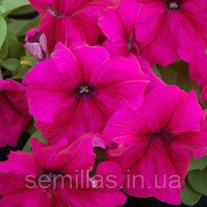 Семена петунии грандифлора (крупноцветковой) Лимбо F1, бургунди 1 000 сем. (драж.)