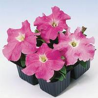 Семена петунии грандифлора (крупноцветковой) Танго F1, розовая 1 000 сем. (драж.)