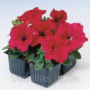 Семена петунии грандифлора (крупноцветковой) Танго F1, красная 1 000 сем. (драж.)