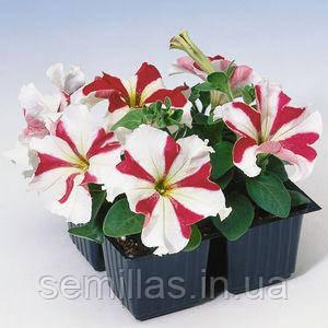 Семена петунии грандифлора (крупноцветковой) Танго F1, красная звезда 1 000 сем. (драж.)