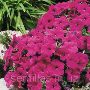 Семена петунии мультифлора (многоцветковой) Ламбада F1, пурпурная 1 000 сем. (драж.)
