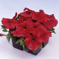 Семена петунии мультифлора (многоцветковой) Мамбо F1, красная 1 000 сем. (драж.)