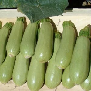 Семена кабачка Асма F1 (Clause) 500 семян — ранний гибрид, светлый