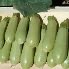 Асма F1 насіння кабачка 500 насінин — ранній, світлий Clause
