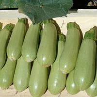 Семена кабачка Асма F1 (Clause) 2500 семян — ранний гибрид, светлый