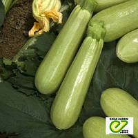 Семена кабачка Ардендо F1 (Enza Zaden, АГРОПАК+), 100 семян — ранний гибрид (40-45 дней), светлый