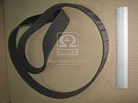 Ремень 10PK-1703 КАМАЗ ЕВРО-2 ген. широкий (производство Rubena) (арт. 10PK-1703), ACHZX