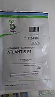 Семена огурца Атлантис F1 / Atlantis F1 (Бейо / Bejo) 10 г — пчелоопыляемый, ранний гибрид (42-45 дней), фото 1