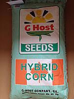 Семена кукурузы G Host GS110 N29 (Джи Хост) ФАО 290