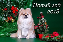 В чем встречать Новый год 2018 (год Собаки)