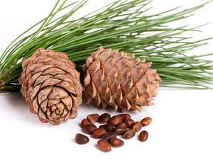 Семена декоративных кустарников и деревьев