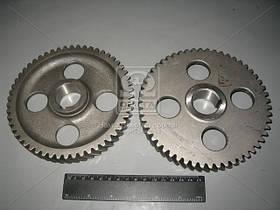 Шестерня вала распредилительного Д 260, Z=54 (производство ММЗ) (арт. 260-1006214), AFHZX
