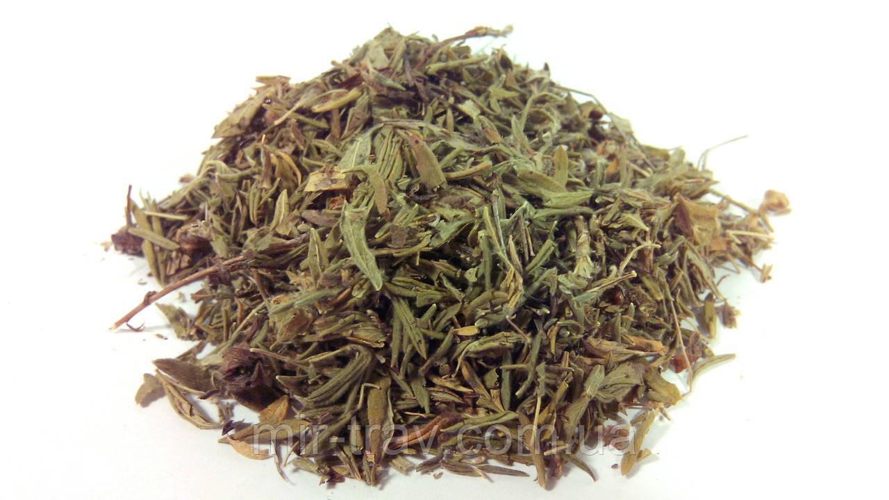 Курильский чай (лапчатка кустарниковая, пятилистник)