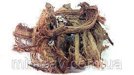 Красный корень корень (копеечник)