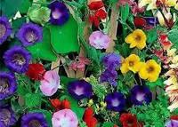 Вьющиеся растения смесь (однол) 0,5г ТМ Агромакси