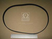 Ремень поликлиновый 5PK1135 (производство DONGIL) (арт. 5PK1135), AAHZX