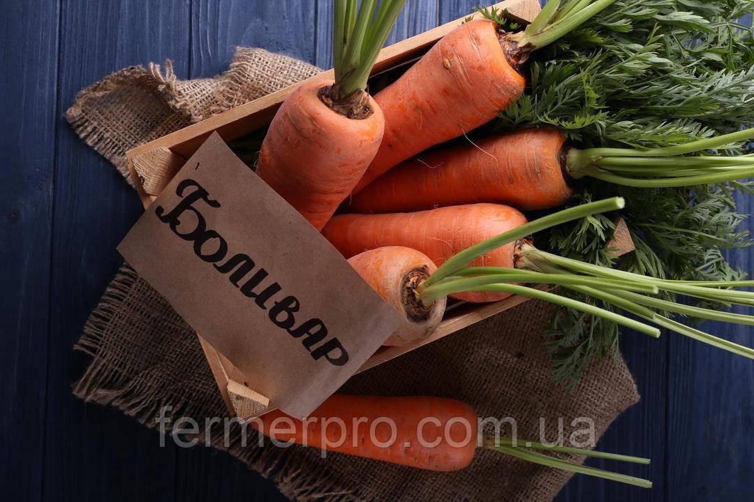Насіння моркви Болівар F1 \ Bolivar F1 500.000 насіння (1.6 -2.0) Clause