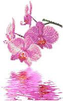 """Схема для вышивки """"Орхидеи"""""""