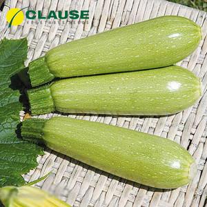 Семена кабачка Супер Дония F1 (Clause), 2500 семян — ранний гибрид, светлый