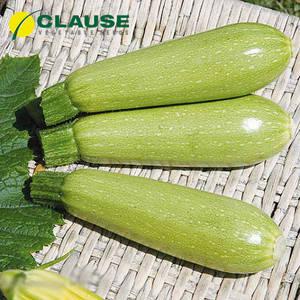 Семена кабачка Супер Дония F1 (Clause), 2500 семян — ранний гибрид, светлый, фото 2