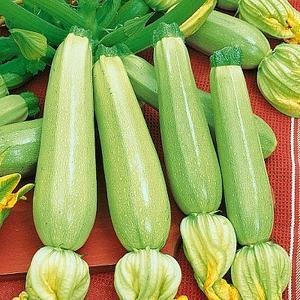 Семена кабачка Каризма F1, 100 семян — ранний гибрид (40 дней), светлый