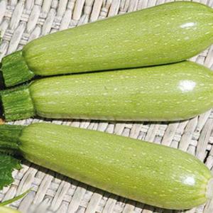 Семена кабачка Теренум F1(Lark Seeds), 500 семян — вирусоустойчивый