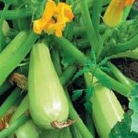 Семена кабачка Муфаса F1 (Lark Seeds), 500 г — мультивирусо устойчивый , 45-48 дн