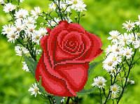 Роза в ромашках