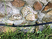 Капельная трубка (Украина), капельницы отсутствуют, диаметр 16 мм, 200м., фото 3