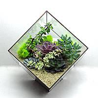 """Флорариум """"Куб"""" с гастерией, эхиверией и стабилизированным мхом, ширина -30 см, высота -28 см."""