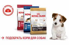 Специальное предложение на корм для собак