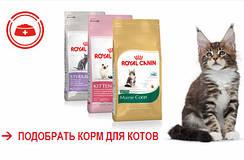 Специальное предложение на корм для котов