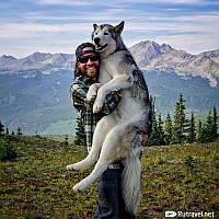Путешествия с собакой. Ветеринарные документы