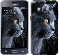 """Чехол на Samsung Galaxy J1 (2016) Duos J120H Красивый кот """"3038c-262-328"""""""