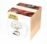 Набор для выращивания Экокуб Хурма Код:114-10817362