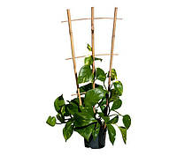 Бамбуковая лесенка для растений S 3*4, L 2,1м