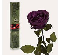 Долгосвежая роза Королевская в подарочной упаковке Код:228-18415374